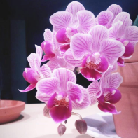 Grow More Fertilizer is excellent food ^_^ For healthy Orchids, visit : http://amzn.to/2FO2r2i